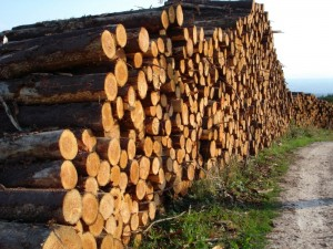 Round timber, ready for export?