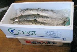 I framtida skal vi framleis tene pengar på fisk heller enn olje. Har vi innsett dette? Foto: Jørgen Schyberg/http://www.flickr.com/photos/mrjorgen/27753041/