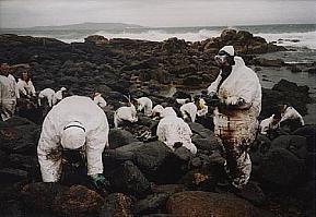 Frivillige rensar opp etter Prestige i Galicia. Vi treng ikkje slike scenar frå Finnmarkskysten. Foto: Wikipedia/User:Viajero/http://tinyurl.com/6fsp2r